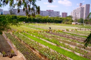 An example of Cuban urban agriculture